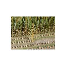 Maïsplanten Bruin